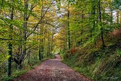 Colores de otoño (Txantxiku) Tags: otoño colores bosque camino naturaleza