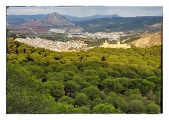Pinar Del Hacho pines, Antequera (ranp121) Tags: antequera pueblos blancos white village la peña de los enamorados face mountain pines pino pinar del hacho alcazaba