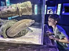 The staring contest (Pejasar) Tags: contest stare america jenks oklahomaaquarium grandson morayeel