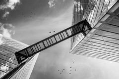 Sky limit (frank_w_aus_l) Tags: muenster nikon df ais 50mm prime birds architecture architektur kristall reflection sky skyscraper city deep glass monochrome mono black blackandwhite bridge noiretblanc netb white münster nordrheinwestfalen deutschland