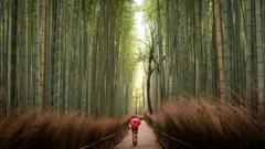 Bamboo Forest (Bastian.K) Tags: sigma 35mm 12 art dg dn sony arashiyama bamboo forest wald bambuswald japan kyoto grove portrait umbrella red schirm regenschirm geisha