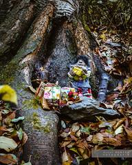 Minairons. Tot a punt pel Nadal (Joan Romero) Tags: minairons autumn mitologia bosque sony sonya77ii ngc vanguard tió soca