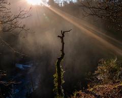 Photo of Misty Light Rays
