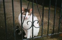 Cat | Hertford - Fujifilm XT30, Fujinon XF18-55mm f2.8-4 (superlomo) Tags: fujifilm hertfordshire hertford xt30 fujfilm fujinon 1855mm cat fuji