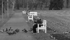 Feeding ducks in the park (rainerralph) Tags: schwarzweiss fe2870200gm 2019advent1 sony streetphotography street a7r3 blackwhite
