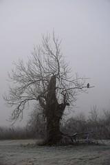 Stiller Moment (Rabea Lepke) Tags: dezember winter d7500 nikond7500 nikon mystisch nebel morgen morgens frühmorgens moment stille stillermoment