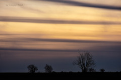 Under the evening sky (Grzesiek.) Tags: sky cloudscape niebo evening tree drzewo zmierch