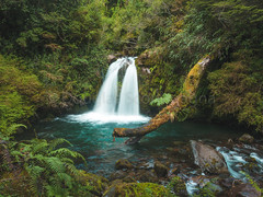 Puyehue National Park (Doug Scortegagna) Tags: waterfall longexposure long exposure chile patagonia puyehue antillanca south america jungle rainforest green mith tree amazing forest wild outdoors trave travel trip