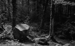 Woods (bingley0522) Tags: leicaiiic voigtlandercolorskopar50mmf25 fp4 ilfordfp4 diafine epsonv500scanner adirondacks newyork castlerocktrail bluemountainlake easternhardwoodforest autaut trees