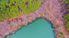 Shoreline (Robchaos) Tags: drone aerial dji phantom3 phantom3professional reservoir fall shoreline water lake river trees outdoors nature libertyreservoir maryland carrollcounty gamber finksburg eldersburg westminster dronephotography