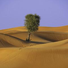 Fossil Rock (keltia17) Tags: desert désert desierto uae eau emirates tree arbre solitaire dunes dunas emiratos sand red orange