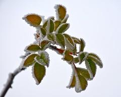 frostig (Rabea Lepke) Tags: d7500 nikond7500 nikon frost frostig dezember winter morgens früh frühmorgens