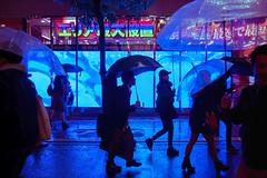 LET THE RAIN SHINE IN 94 (ajpscs) Tags: ©ajpscs ajpscs 2019 japan nippon 日本 japanese 東京 tokyo shinjuku city people ニコン nikon d750 tokyostreetphotography streetphotography street shitamachi night nightshot tokyonight nightphotography citylights tokyoinsomnia nightview strangers urbannight urban tokyoscene tokyoatnight rain 雨 雨の日 cityrain tokyorain nighttimeisthenewdaytime lostnight noplaceforthesun anotherrain umbrella 傘 whenitrainintokyo arainydayintokyo lettherainshinein