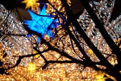 Blue star (Pascal Volk) Tags: berlin mitte verabrittainufer berlinmitte weihnachtsdekoration christmasdecoration decoraciónnavideña décorationsdenoël juledekoration stern star estrella invierno winter fujifilmxh1 fujifilmfujinonxf80mmf28rlmoiswrmacro 80mm phaseonecaptureone