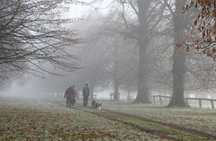 Winter walk (Scene the light...) Tags: november morning cold misty foggy frosty mist fog frost day early autumn winter northampton northamptonshire country countryside walk walking dog wet nikon d7500