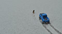 Advent of Snow (335/365)