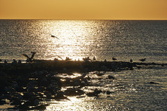 Callantsoog (Jos Mecklenfeld) Tags: meer zee sunset sea beach strand zonsondergang sonnenuntergang noordzee northsea nordsee netherlands noordholland callantsoog sel55210 sonye55210mmf4563oss sonya6000 sonyilce6000