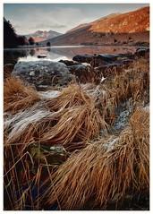 Frosted Grasses (busmender1964) Tags: frostedleaves frost snowdonia snowdonianationalpark northwales llynmymbyr landscape welshlandscape breathtakinglandscapes