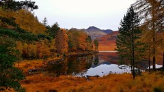 Autumnal colours - Blea Tarn - 2019-10-25 (BillyGoat75) Tags: autumn autumnal autumncolours trees tarn bleatarn thelakedistrict thelakes cumbria littlelangdale reflections