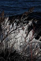 Frozen (Cindy's Here) Tags: frozen ice branches light icicles spiritgarden trail lake lakesuperior thunderbay ontario canada canon gratitude take aim