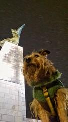 just the usual (morosus) Tags: morcsos snow szabadságszobor budahills budapestbudapest buda budapestdogs budapest kutyabarát kutyasál hó terrierlife jagdterriermix terrier