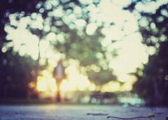 I am easy to find (Mister Blur) Tags: home blurism blur forlife desenfoque bokeh sunset atardecer mérida yucatán méxico woman blurry leaves trees low pointofview pov golden tones sun flare bokehdots autumn automne otoño fall snapped textures texturas nikon d7100 35mm nikkor lens f18 iameasytofind thenational rubén rodrigo fotografía elitegalleryaoi bestcapturesaoi aoi