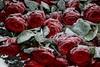 _Q3A0044 (www.ilkkajukarainen.fi) Tags: heroes roses ruusut jäätyneet suomi finland finlande eu europa scandinavia helsinki hietaniemi hautausmaa karjalaan jääneiden muistolle life line visit photography fotography frozen kukka flower worldwarii