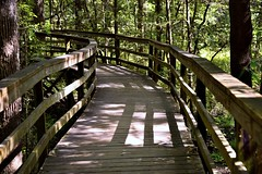 It Was Time to Head Out and Explore Another National Park (Congaree National Park)