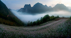 vd_00148 (Hanoi's Panorama & Skyline Gallery) Tags: ha giang vietnam flower spring moutain landscape clouds sunrise moon