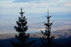 Couple (Grzesiek.) Tags: couple tree spruce lowersilesia drzewo świerk dolnyśląsk