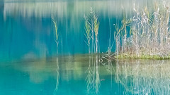 blue and white (makriver) Tags: trim reflection green natural xt3 fujixsystem fujifilm reeds japan grass plant colors stamp water nature white blue