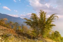 _Y2U1125.0214.Ngải Thầu.Bát Xát.Lào Cai (hoanglongphoto) Tags: asia asian vietnam northvietnam northeastvietnam northernvietnam landscape scenery vietnamlandscape vietnamscenery nature theforest forest bambo flankshill hillside sky bluessky clouds afternoon sunny sunshine afternoonsunshine canon canoneos1dx đôngbắc làocai bátxát ngảithầu phongcảnh thiênnhiên buổichiều nắng nắngchiều rừng sườnđồi bầutrời bầutrờixanh mây câytre zeissdistagont3518ze muntain mountainouslandscapeinvietnam flanksmountain núi sườnnúi