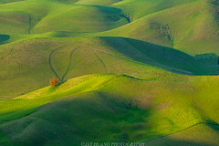Green Hills (Jaykhuang) Tags: rollinghills trivalley tree lonetree springgreen pleasanton livermore dublin bayarea landscape jayhuangphotography california intimate longlens morning lights shape curve