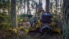 Sleeping Beast, on my Christmas wishlist! (prajpix) Tags: wood woods plantation forest forestry woodland thinning harvesting trees mechanised machinery equipment harvester johndeere 1270g8w