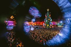 Kaunas Christmas Tree 2019 #334/365