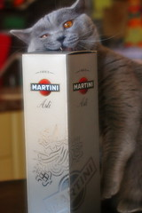 Antonio (Сonstantine) Tags: animals antonio catslife canon catsoftheworld catscatscats cats meowmeow meow meowbox british britishcats photo pic