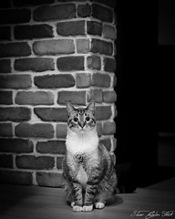 A7300391 (Jean-Charles Frick) Tags: chat noirblanc noir blanc pixel hdr salon cat sony a7iii a73 alpha7 sony2470gm 24 70 gm gmaster net couleur photoshop lightroom retouche photos photo