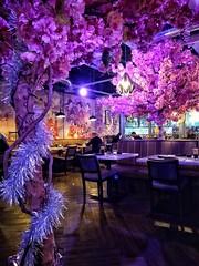 Blue Sakura, Leeds (tubblesnap) Tags: japanese korean chinese malaysian all you can eat buffet blue sakura restaurant motorola leeds snapseed
