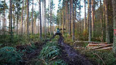 Tracking the Beast (prajpix) Tags: wood woods plantation forest forestry woodland thinning harvesting trees mechanised machinery equipment harvester johndeere 1270g8w