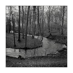 Flowing (K.Pihl) Tags: analog film pellicolaanalogica bw blackwhite schwarzweiss landscape river forest stream hasselblad500cm distagon50mmf40 ilfordhp5400 hc110b