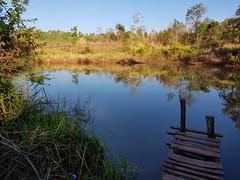 Fishing Hole (SierraSunrise) Tags: thailand phonphisai nongkhai isaan esarn pond reflections dock