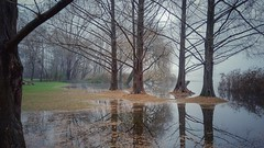 Magical atmosphere (Luc1659) Tags: lago acqua atmosfera alberi bosco verde atmosphere palude parco varese reflections autunno foglie