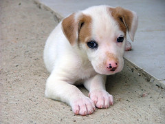 Dog Diarrhea Treatment (cindyguerra622) Tags: dog diarrhea treatment