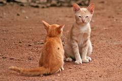 Cat Has Diarrhea (cindyguerra622) Tags: cat has diarrhea