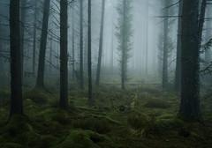 ENDLESS (www.neilburnell.com) Tags: woodland atmosphere trees forest fir moss blue mood landscape