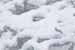 In te riecheggia lo Spirito della Montagna... (In punta di piedi...di Troise Carmine - Washi) Tags: troisecarminewashi inpuntadipiedi maviesauvage montagnes mountains summits nature natura park parconazionalegranparadiso italy italia snow winter canon fox renard volperossa