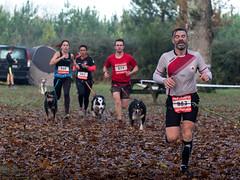 DSCF9688 (michel-hou) Tags: canicross sport dogs course