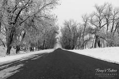 November 29, 2019 - A foggy, frosty road. (Tony's Takes)