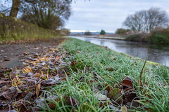 SJ2_0429 - First frost (SWJuk) Tags: swjuk uk unitedkingdom gb britain english lancashire burnley home canal leedsliverpoolcanal towpath grass leaves foliage frost ice trees water landscape groundlevel 2019 nov2019 autumnwinter nikon d7200 nikond7200 nikkor1755mmf28 rawnef lightroomclassiccc
