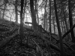Sunrise through the forest (mswan777) Tags: tree ridge forest wood pine leaf climb dune sand sunrise morning up sky light apple iphone iphoneography mobile bridgman michigan monochrome black white ansel outdoor nature scenic